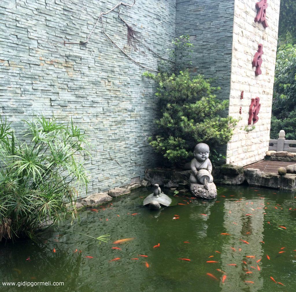 Guangxiao 4