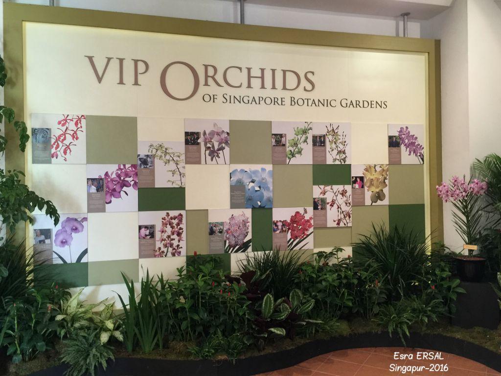 orkide-bahcesi