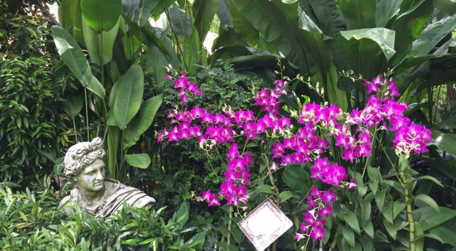Cennetten Bir Köşe: Singapur Botanik Bahçesi